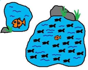 Grote vis kleine vijver vs kleine vis grote vijver