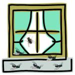 Vlieg in raam